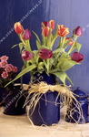 Bouquet de tulipes, pot bleu.
