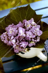 Bouquet de violettes, pot blanc.