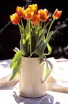 Bouquet de tulipes, pot blanc.